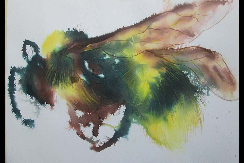 MidvichiV_Bumble_Bleeding-Aquarelle_11x16.jpg